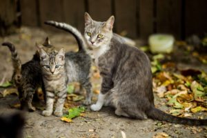 group of cat standing outside in leaves