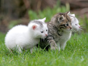 three kittens in the grass