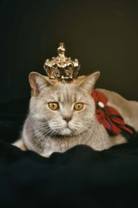 cat wearing a small gold crown