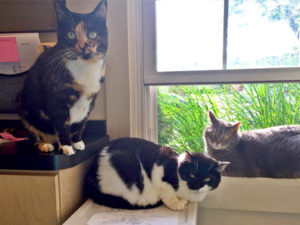 three cats sitting by the window