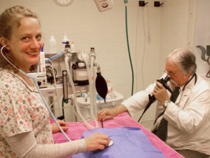 veterinary staff performing an endoscopy