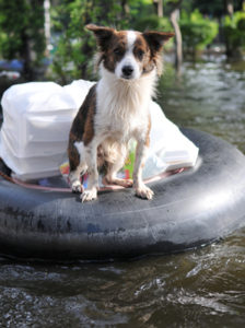 dog on float in a flooded street