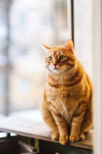 orange cat sitting