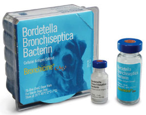 bordetella bronchiseptica bacterin